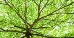 tree-thumb